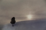 OWENS_2_Winter-tree