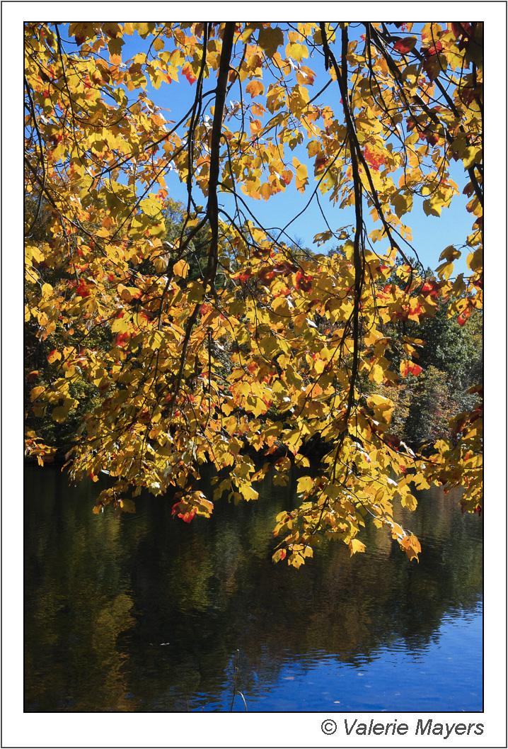 Fall Foliage at the lake