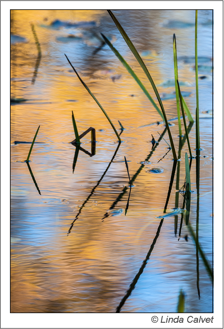 Blades of grass in autumn pond reflection