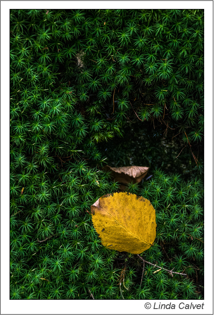 Yellow leaf in green moss