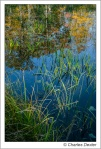 Pond grass amidst reflection of Fall foliage