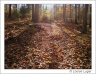 Late afternoon light on a leafy trail