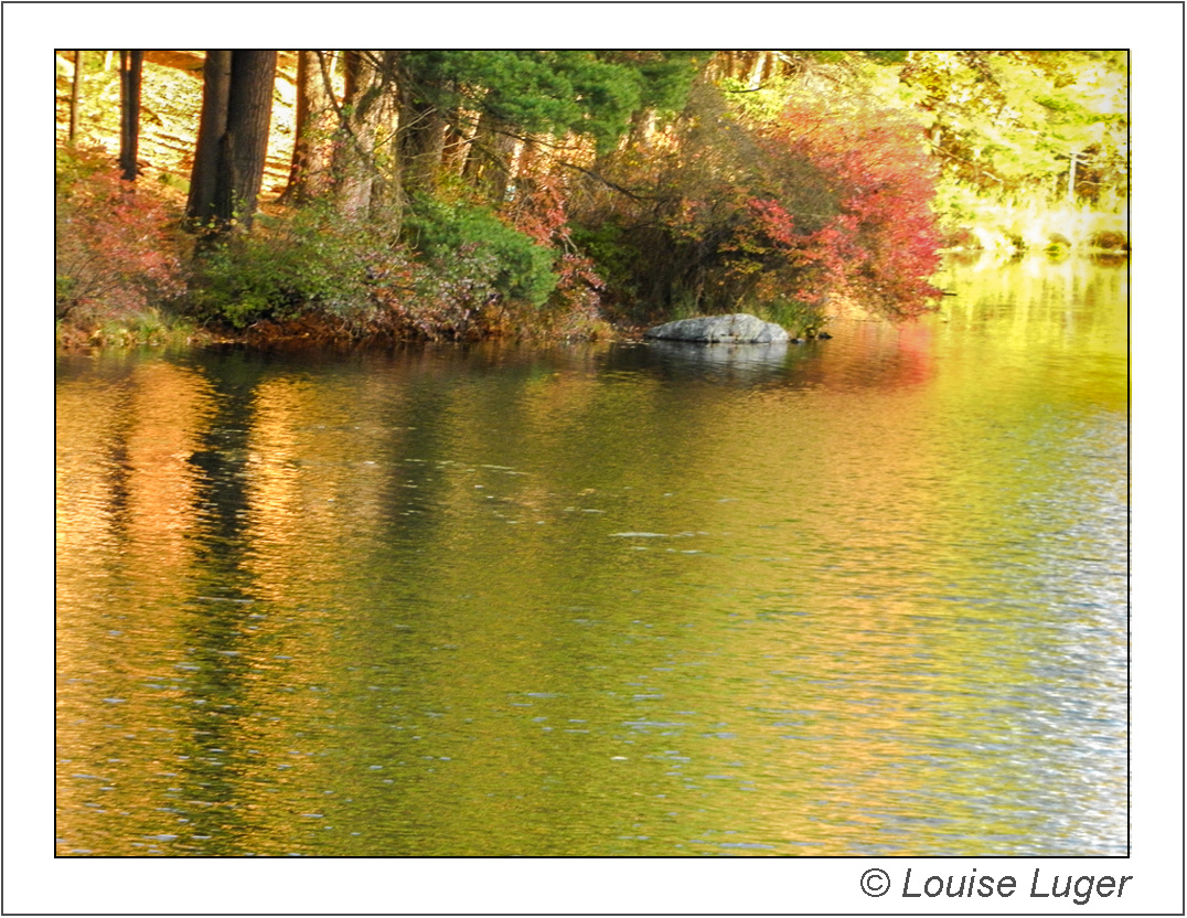 Yellow autumn folige reflected in Lake Nawahunta