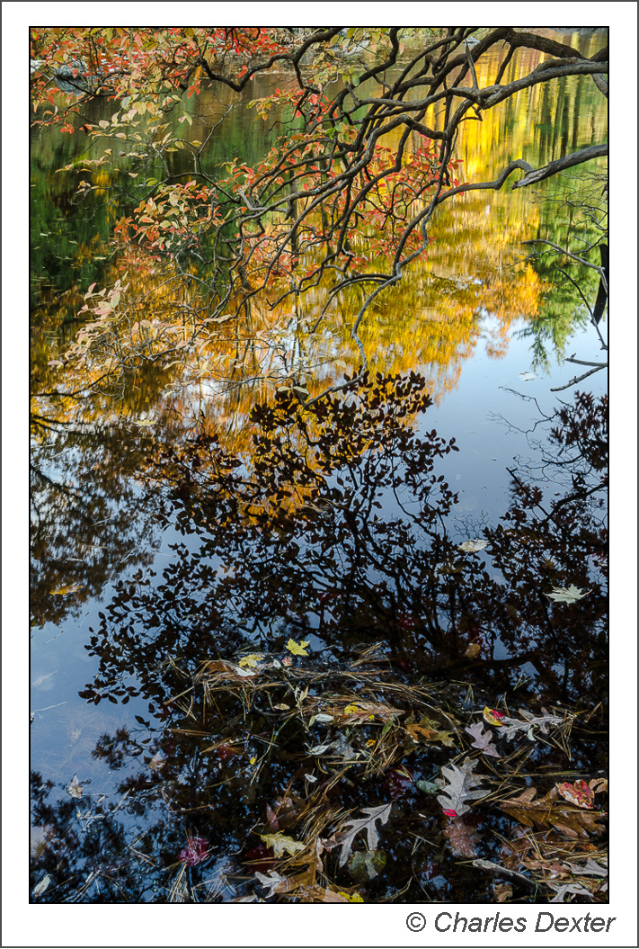Autumn reflections and leaves in Lake Nawahunta