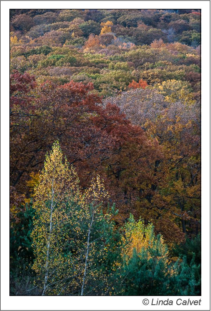 Late afternoon light on Autumn Hillside