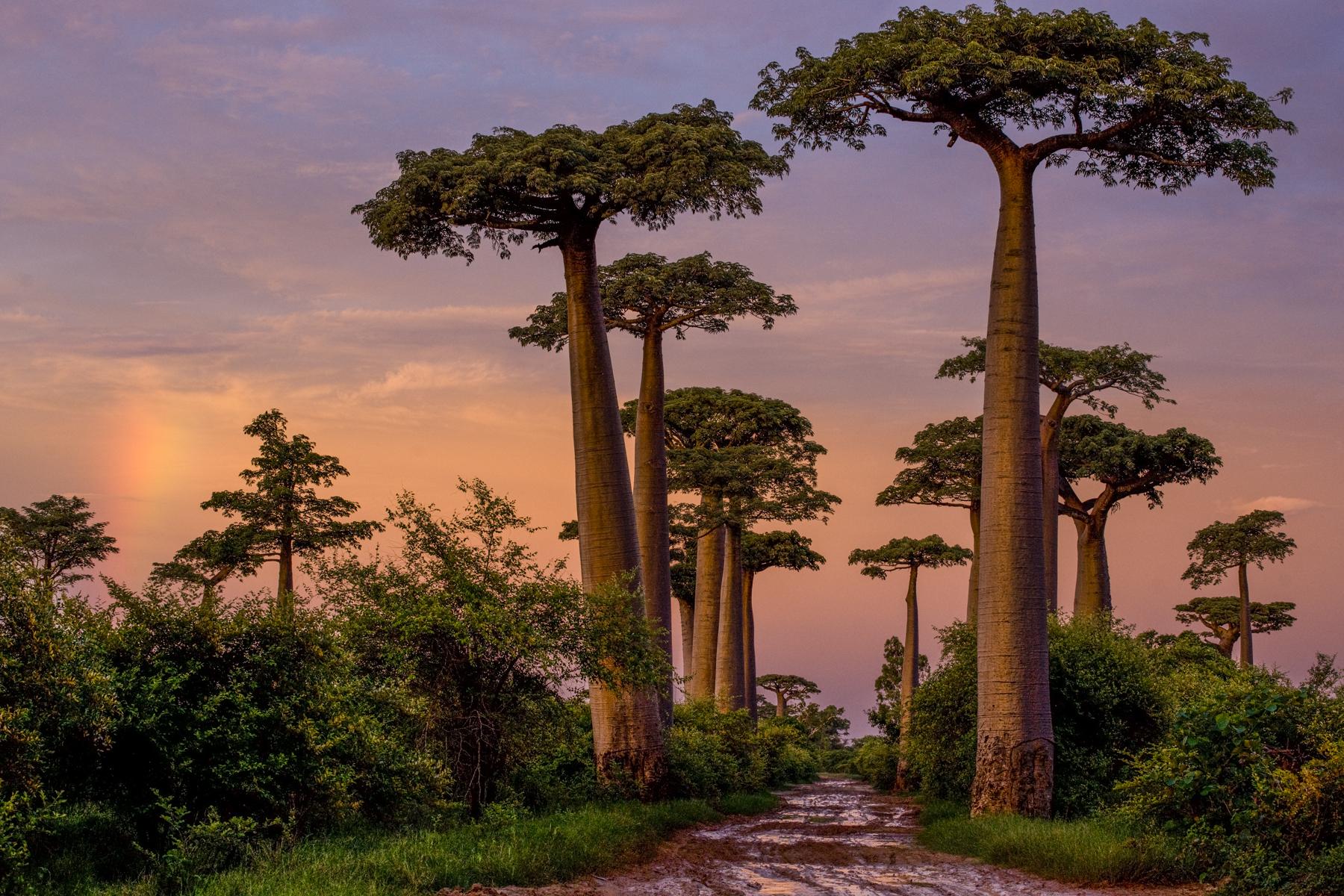 Photograph of Madagascar © Cristina Mittermeier