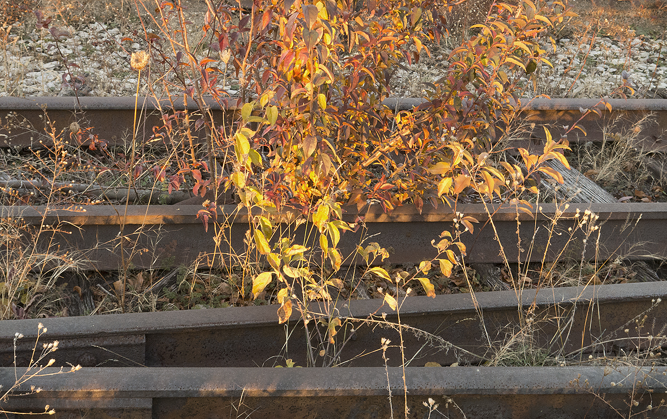 High Line, Original Tracks  © Judy Rosenblatt