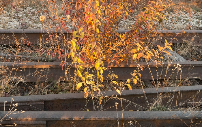 High Line, Original Tracks  © Judy Rosenblatt
