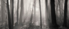 Photo, Fog on New Year's Day, Connecticut woods, 2012 © Tom Gril