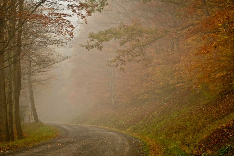 Gentle Autumn ©Tom Dwyer, color photograph misty road in autumn