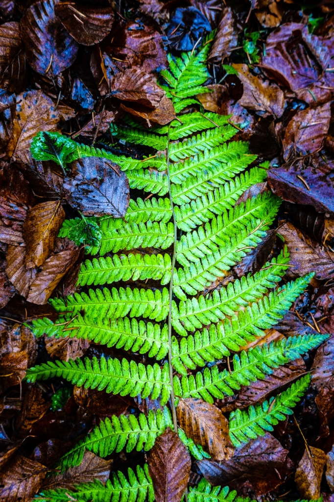 Photograph, green fern frond on brown leaves, © Katrin Eismann