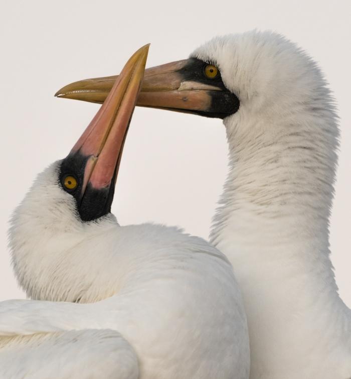© Gabriel Biderman, Espanola Island; Galapagos; Punta Suarez