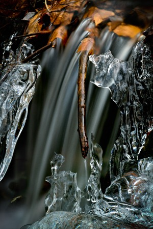 Color photo of water, ice and fall leaves Ice Water #1 © Sharron Lee Crocker