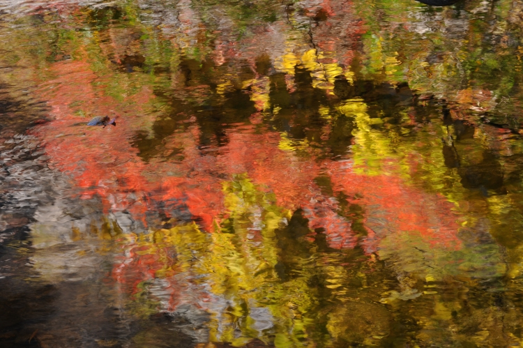 Abstract color photograph of fall reflection in water © Pierre Henri