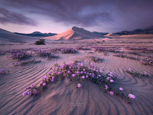 Color photograph by Erin Babnik