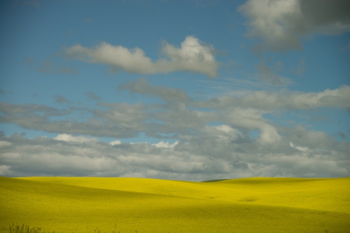 Photograph of field and cloudy sky The Palouse, Washington State ©2014 Lynne R. Cashman