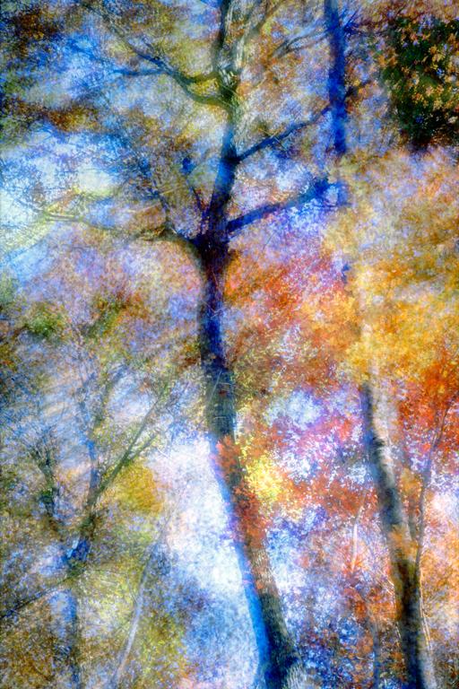 Autumn trees – Multi-exposure © John Wazeter