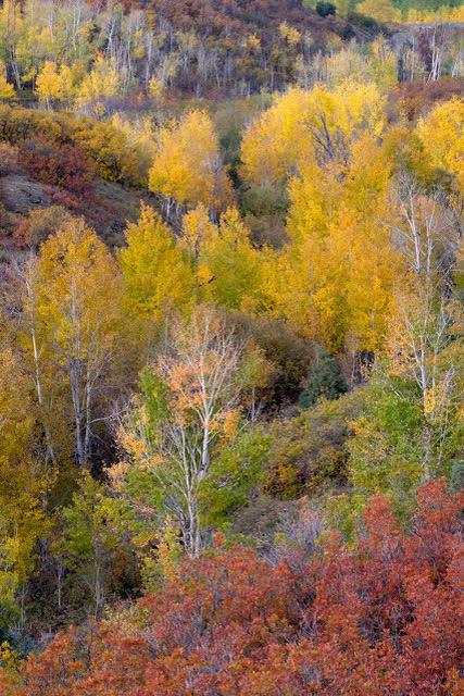 © John Barclay, Fall in the Dallas Divide Colorado