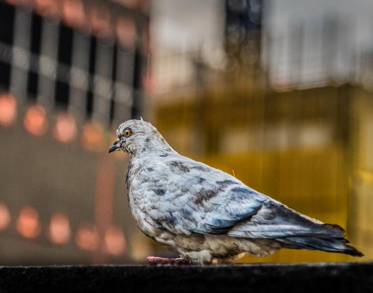 © John Brengleman, New Yorker, New York City, NY