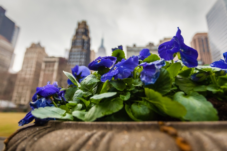 © Kevin Case, Flowers in Bryant Park, Bryant Park, NYC