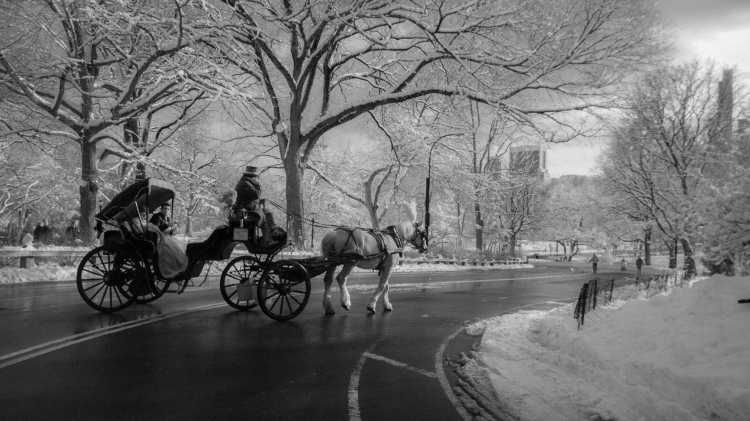© Lynne R, Cashman, Tradition, Central Park, NYC