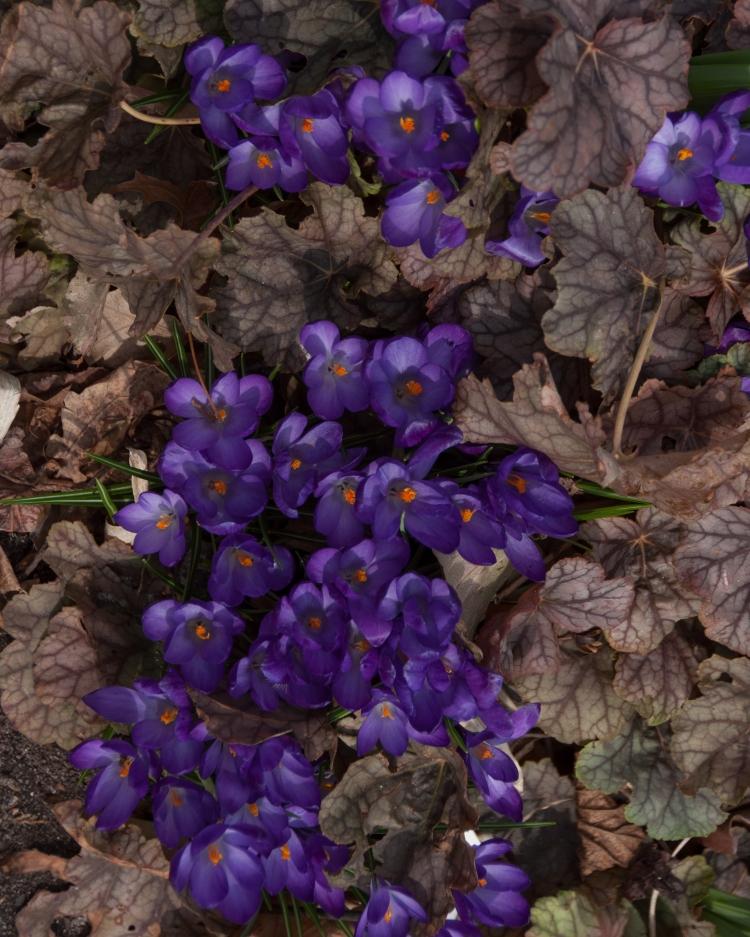 © Anne Chamberlian, Springtime Appearance, Brooklyn, NY