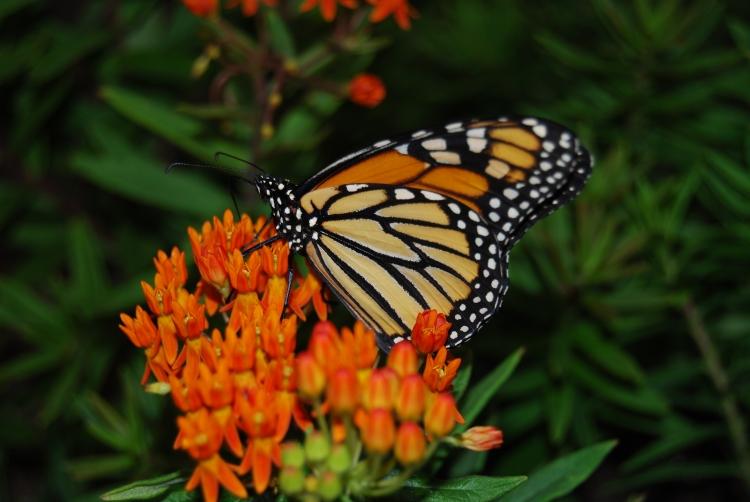© Sherman Eng, Butterfly, Long Island Aquarium, NY