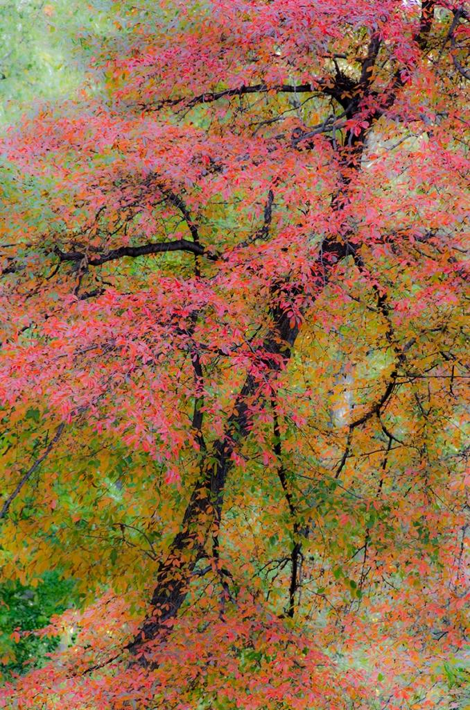 © Patricia Garbarini, Ruby Riches, New York Botanical Garden