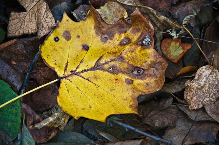 © Barbara E. Leven, Autumn Ice, Atkinson, New Hampshire