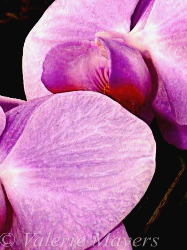 © Valerie Mayers, Passion, NY Botanical Garden, NY,