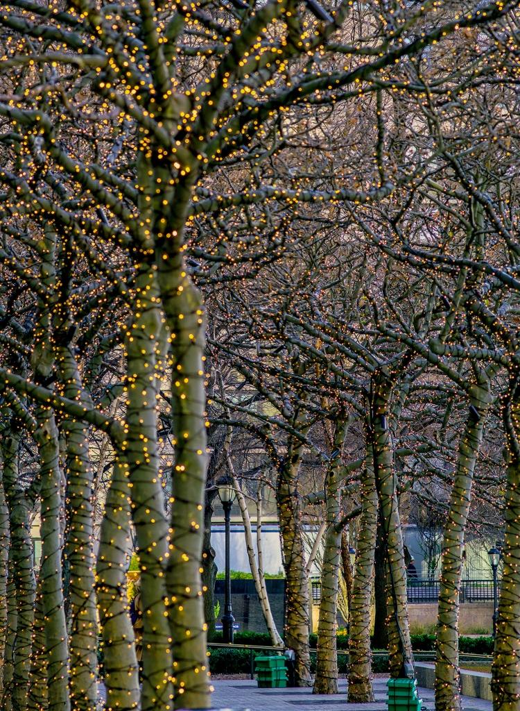 © Nolan Rhodes, Urban Trees, Battery Park City, NYC