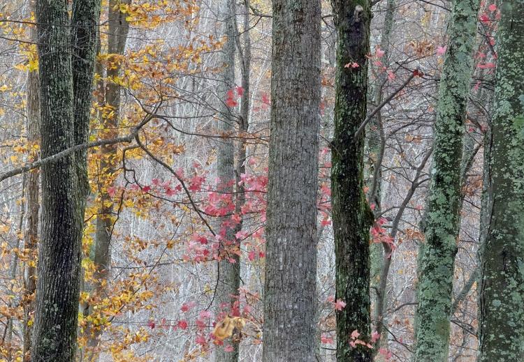 © Judy Rosenblatt, October Snow, Smokey Mountains, TN