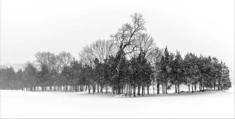 © Claudia Schellenberg, Tree Line, Trumbull, CT